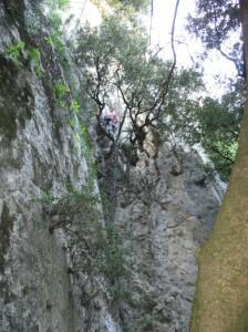 17 ça grimpe les arbres servent parfois de relai